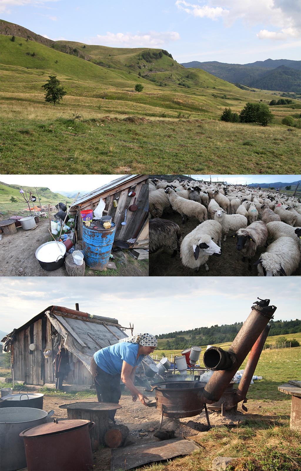 schaapherders in Maramures