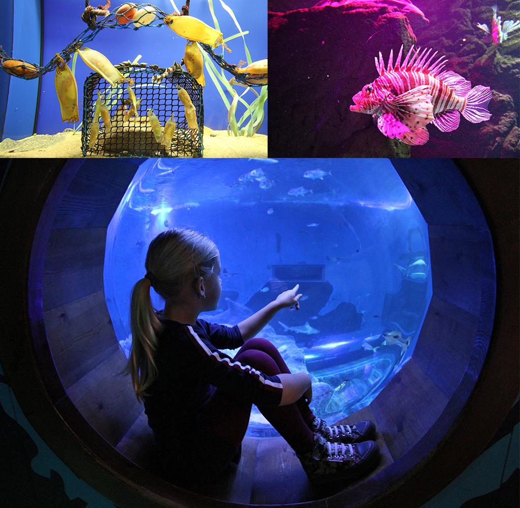 stedentrip Sevilla met kinderen - aquarium