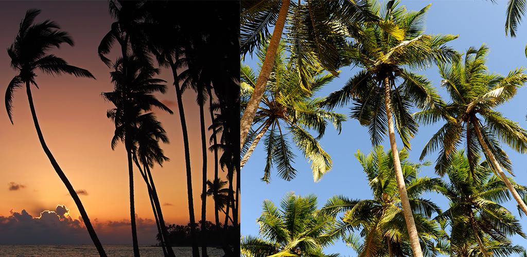 strand Sri Lanka Uppuveli