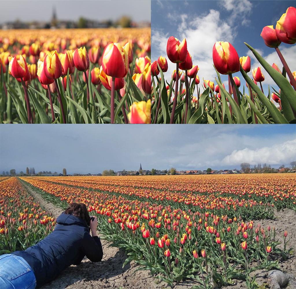 tulpen fotograferen - 2 verschillende foto's