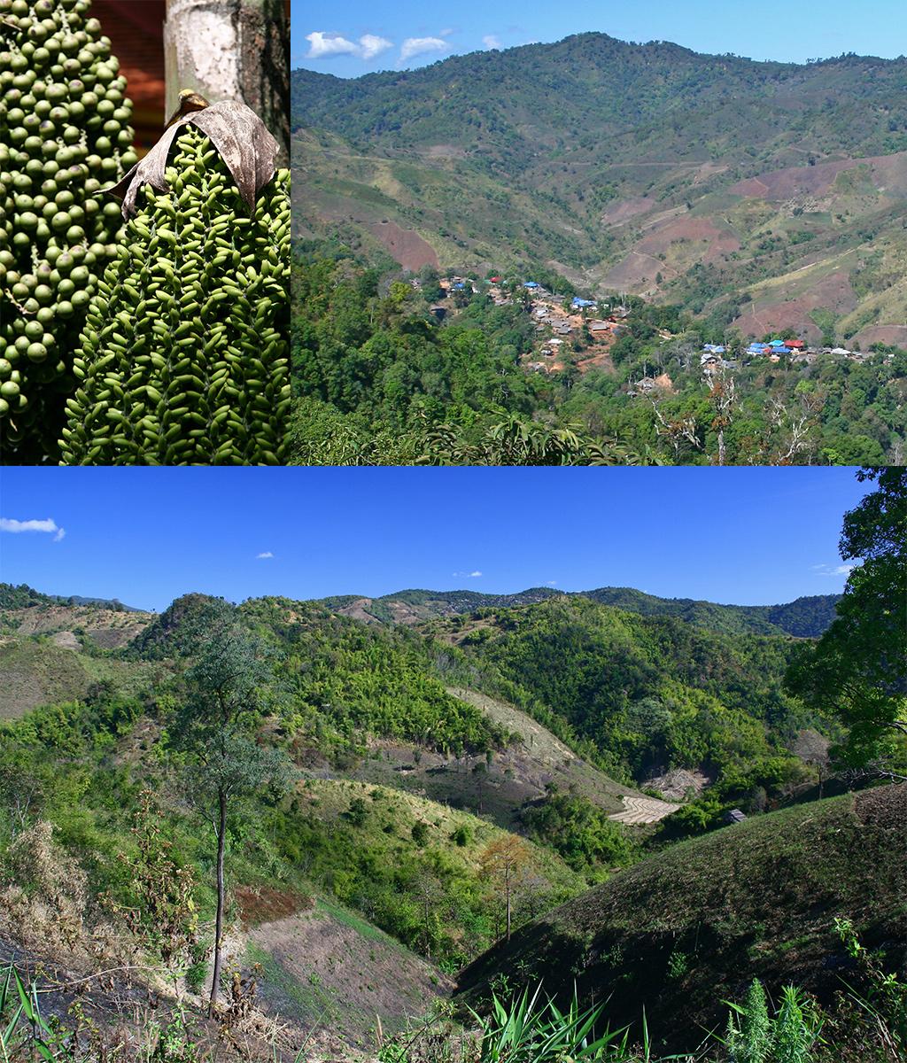 tussen Chiang Rai en Mae Salong